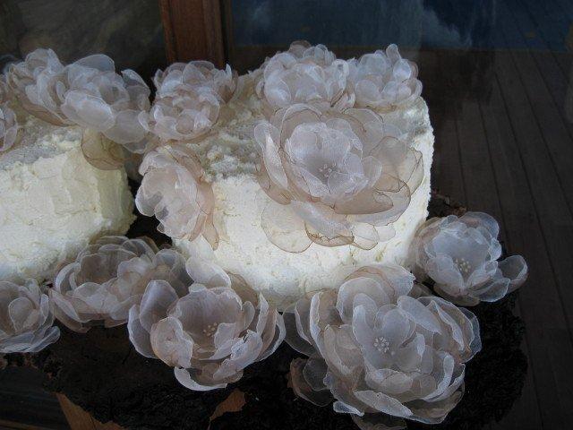 Cake-judith_mcdougall