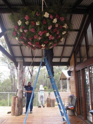Hoisting_flower_baskets-odelia_sarre